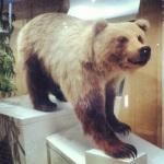 ROM bear